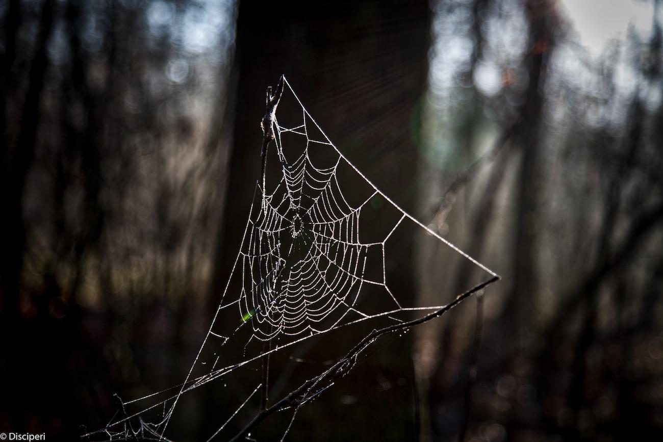 Spinnenweb, 29-12-2016