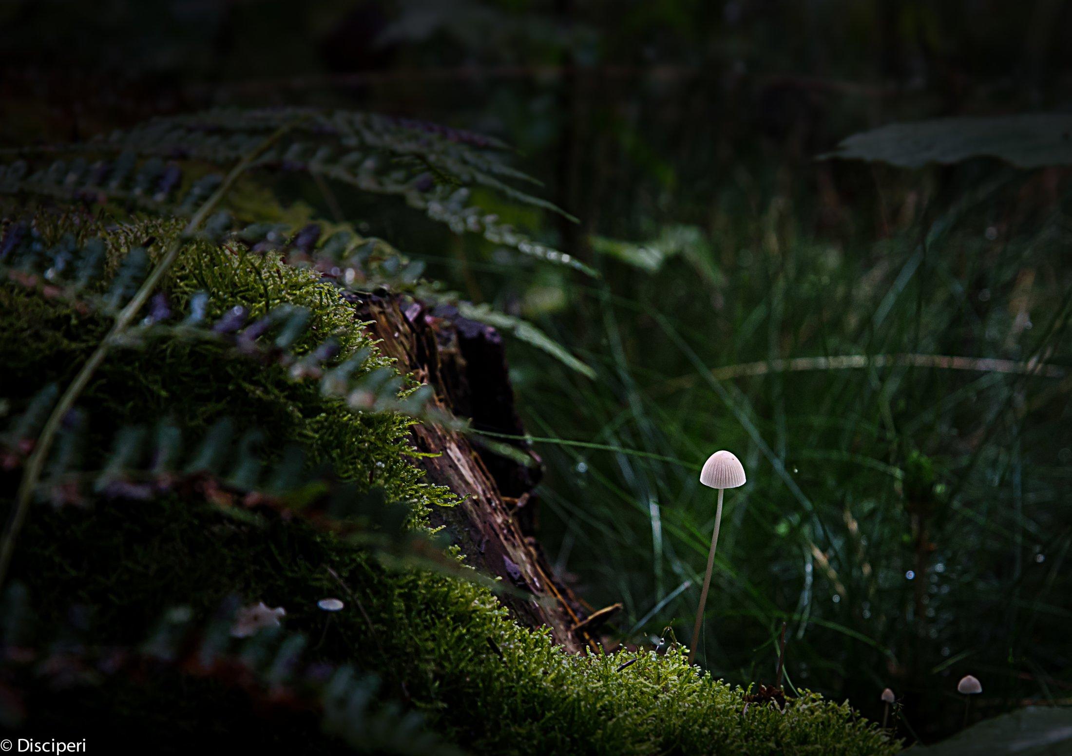 paddenstoel in bos